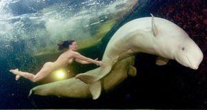 Η Ρωσίδα επιστήμονας που κολυμπά γυμνή διπλα στις λευκές φάλαινες (video)