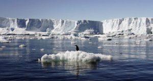 Στην Ανταρκτική το μεγαλύτερο καταφύγιο θαλάσσιας ζωής στον κόσμο